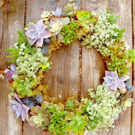 A succulent wreath creation (medium size shown. plants not included)