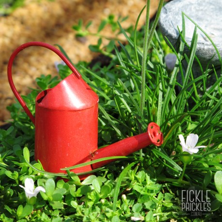 Mini Red Watering Can