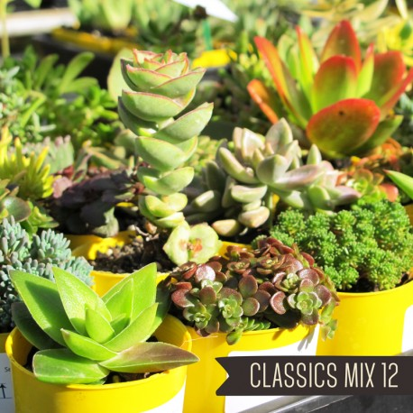 Classics Mix of 12