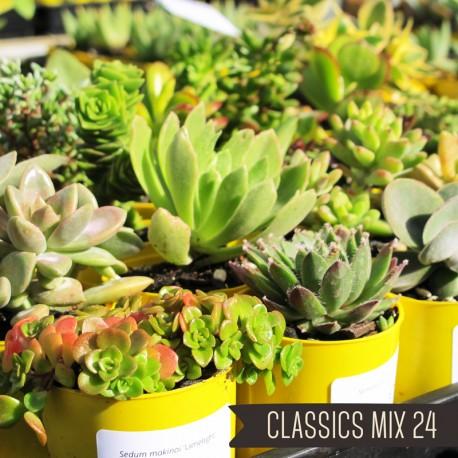 Classics Mix of 24