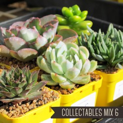Collectables Mix of 6