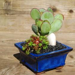 Succulent Bonsai Planter Kit