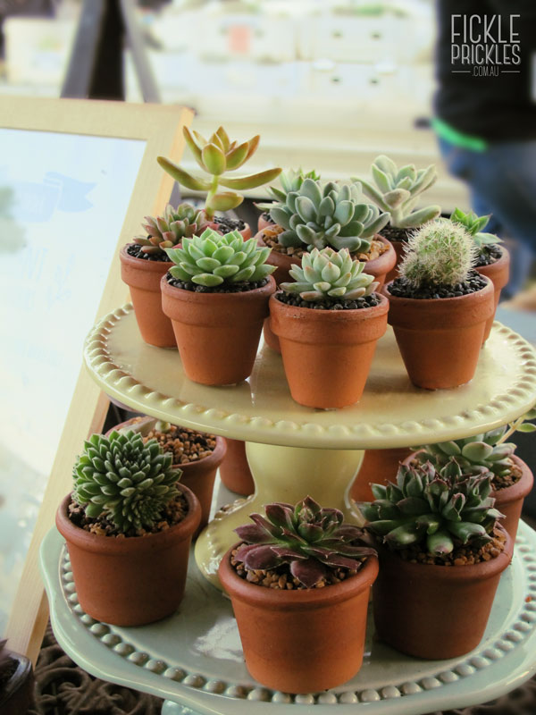 Succulent wedding favours displayed on a tiered cake stand