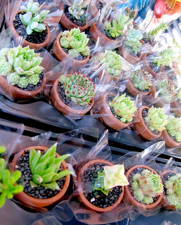 Succulent wedding favours display