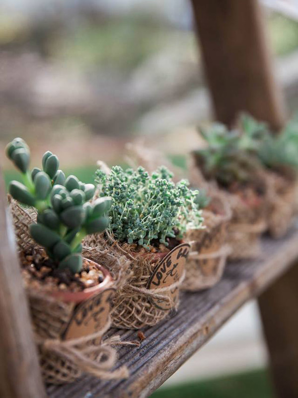 Succulent Wedding Favours - Monica Defendi Photography
