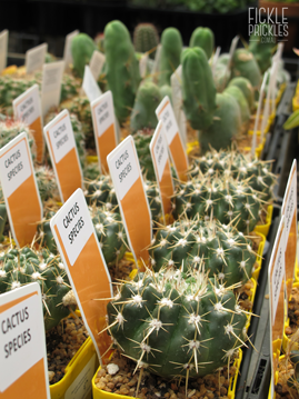 Named Cacti