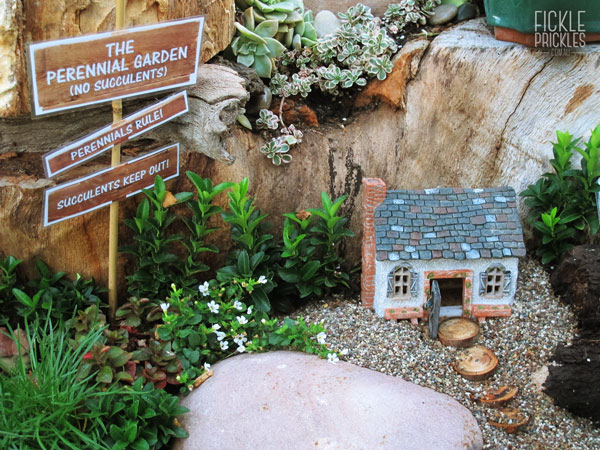 Miniature garden made with perennials