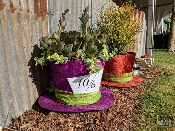 Mad Hatter top hats, planted with succulents
