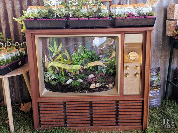 Vintage Television made into a terrarium