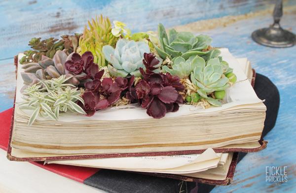 Succulent book
