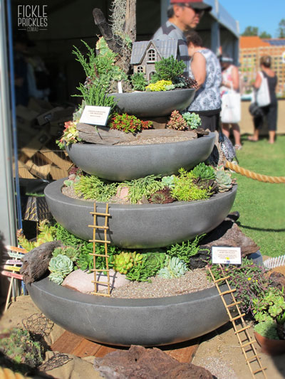 Succulent fountain display
