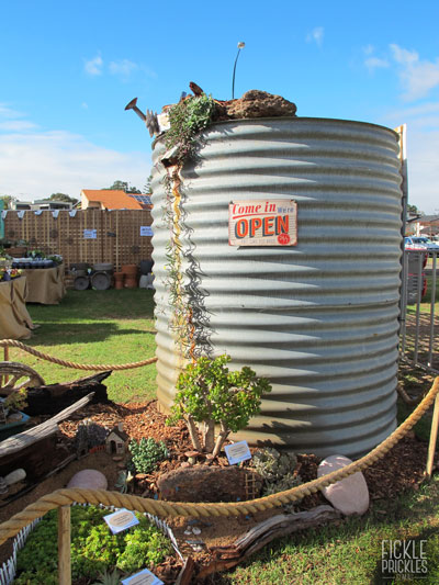 Water tank with Othonna 'Ruby Necklace'