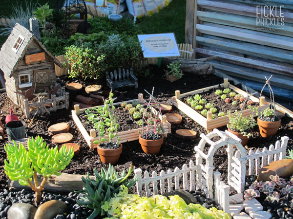 Succulent miniature farm in a wheelbarrow