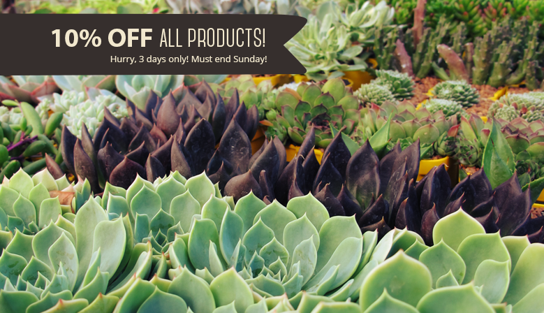 10% off All Products! Must end Sunday!