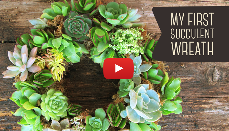 My First Succulent Wreath - DIY your own!