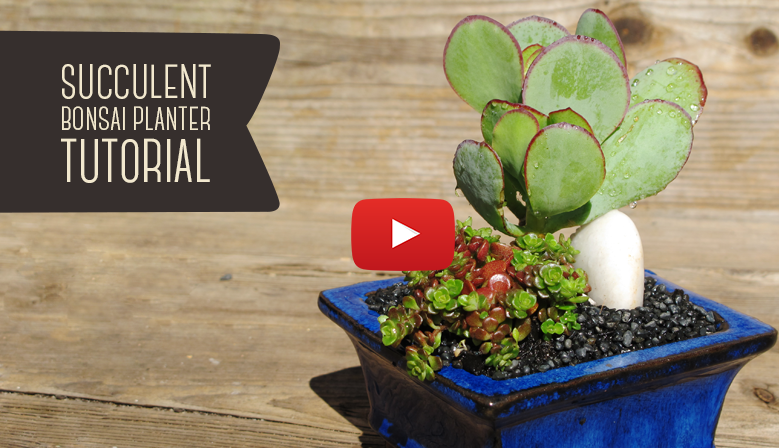 DIY Succulent Bonsai Planter Tutorial