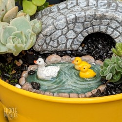 Mini Duck Pond