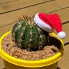 Mini Santa Hats for Plants - Pack of 5
