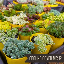 Ground Cover Mix of 12