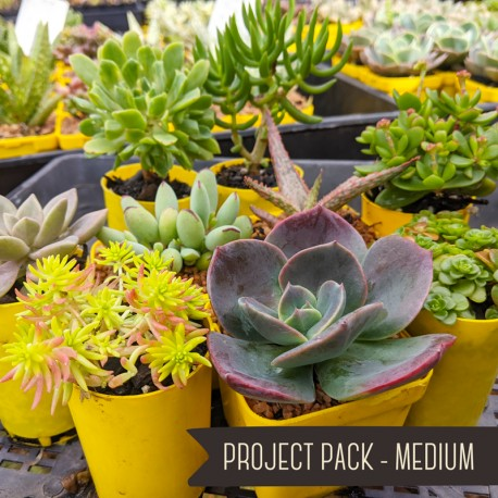 Project Pack - Medium