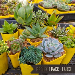 Project Pack - Large