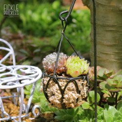 Mini Black Hanging Basket