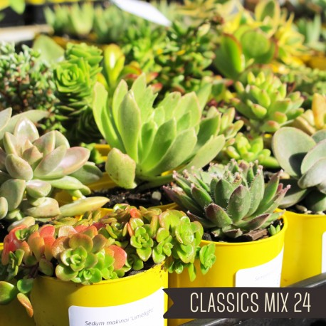 Classics Mix of 24