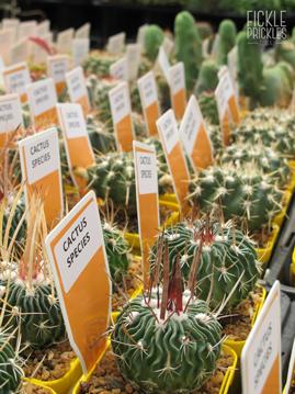 Named Cacti