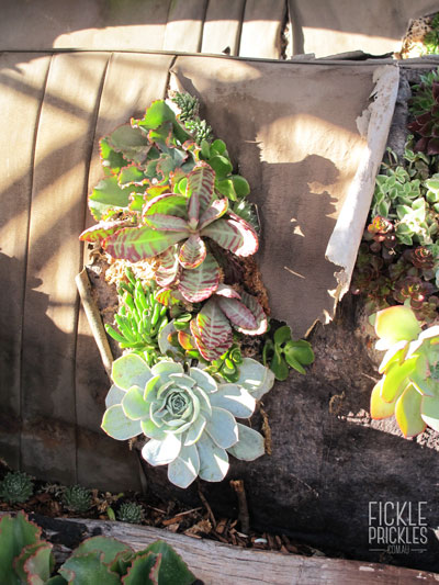 Succulents planted into the car seat