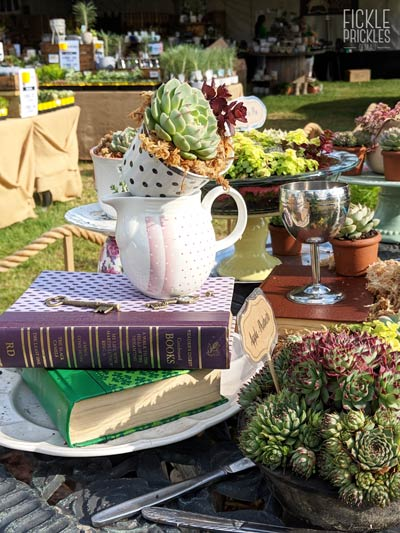 Succulent Book and Tea Cup Stack