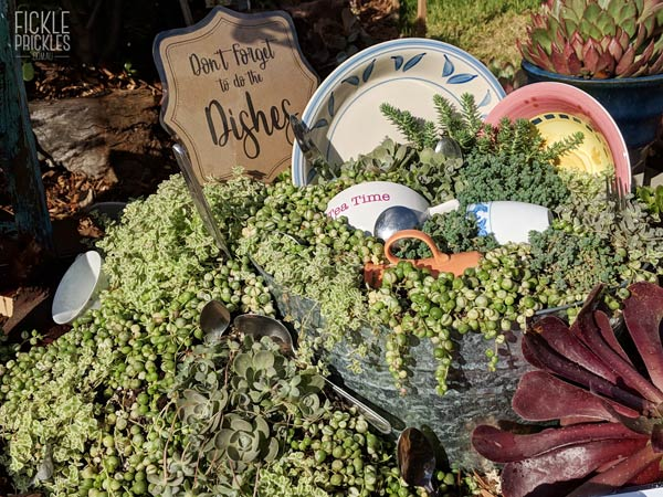 Succulent Dishes Tub - Don't Forget to do the Dishes!
