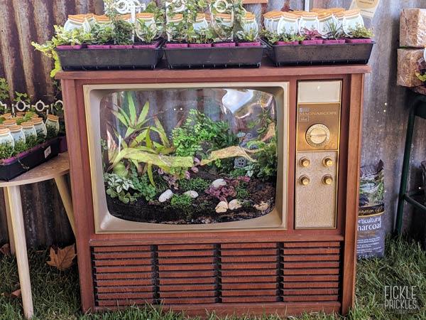 Vintage Television made into a terrarium