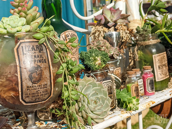 Apothecary Bottles - Succulents
