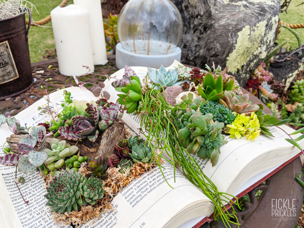Spell book with Succulents