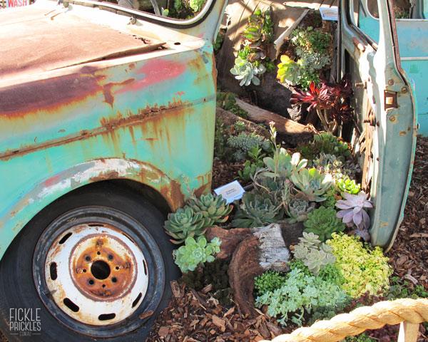 Succulent Car Display