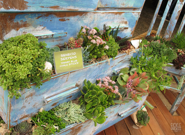 Succulent drawers