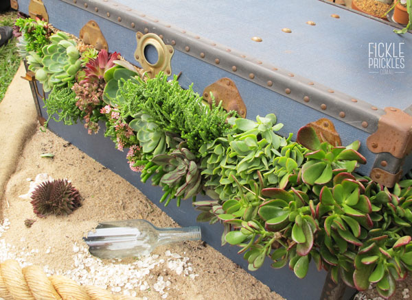 Succulent treasure chest