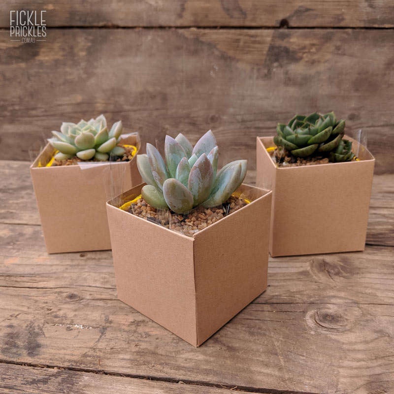 Succulent wedding gift box