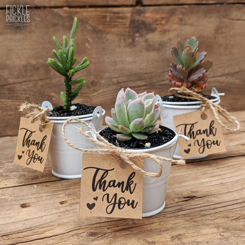 Succulent wedding gifts thank you tag