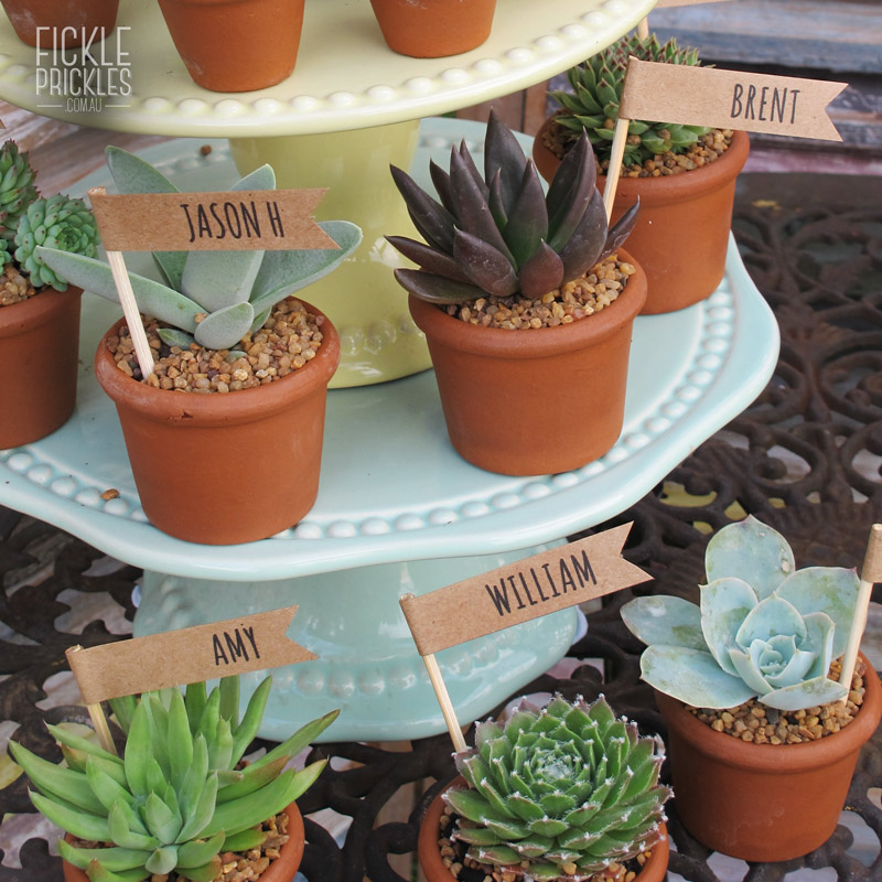 Succulent wedding gifts with name tag