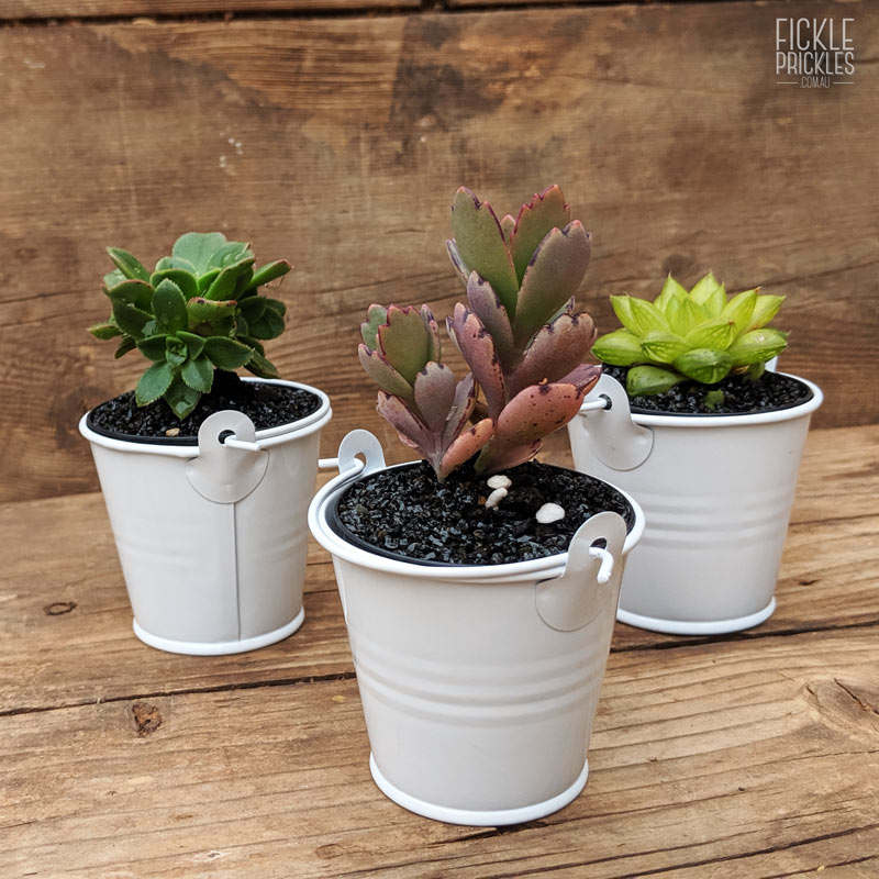 Succulent wedding gift white tin bucket