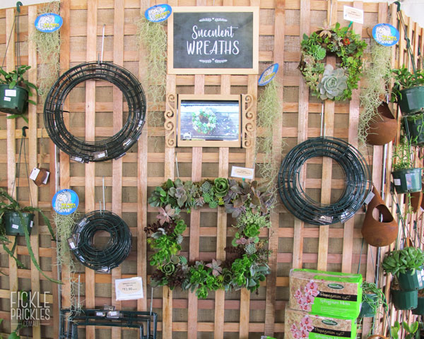 Succulent wreath frames and supplies