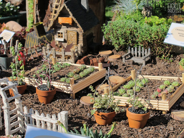Succulent miniature farm in a wheelbarrow