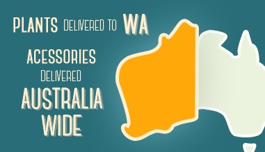 Plants delivered to WA, Accessories delivered Australia wide!